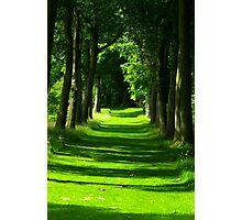 The Avenue - Thorp Perrow Photographic Print