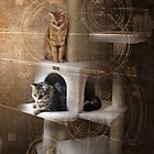 Abstracats by Christina Brundage