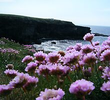 Sea Pinks and Kilkee Cliffs by Connie  Danaher