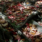 Roots and Leaves by ajnphotography