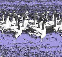 Marching Geese by BorisBurakov