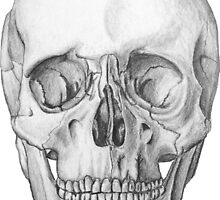 Too Cool For Skull  by Margaret  Kammerer