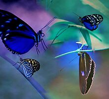 butterfly dream by Johan  Nijenhuis