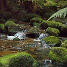 mossy creek - at St Columba Falls, east coast Tasmania  by gaylene