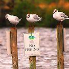 No fishing by Tony Hadfield