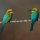Birds on a wire by gardenofbeeden