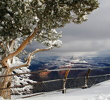Snow in the Grand Canyon by Michelle Pearson