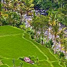 Ayung River - Ubud, Bali by Stephen Permezel