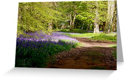 A Walk in Bluebell Wood- Thorpe Perrow (Spring) by Trevor Kersley