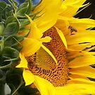 SunFlower @ by ChereeCheree
