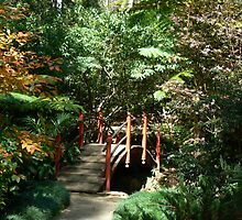 Autumn in Tamborine with Japanese Garden Bridge  by Virginia McGowan