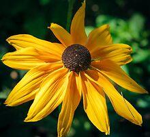 Echinacea yellow by artemkorenuk