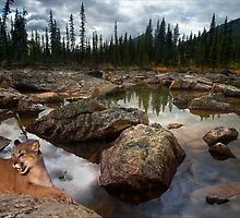 973-Cougar Waters by George W Banks