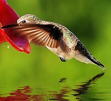 Caught In The Nectar by Pat Moore