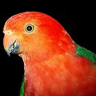 Male King Parrot #1 by Bev Pascoe