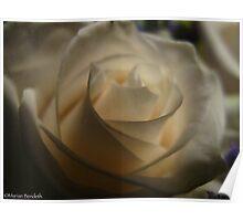 Whispering rose Poster