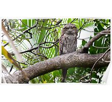 Tawny Frogmouth 1 Poster