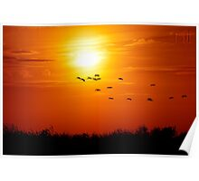 Everglades Sunset with Flock of Birds Poster