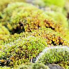 Green moss by Mark Bateman