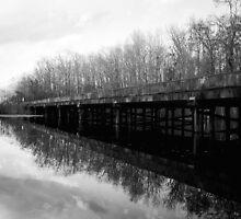 Bridge at Brewington Swamp, Manning SC by AlixCollins