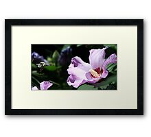 Coming Back For Seconds! Framed Print