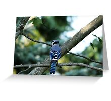 Singing The Blues - Blue Jay Greeting Card