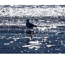 photoj Seagull Having a Dip Photographic Print
