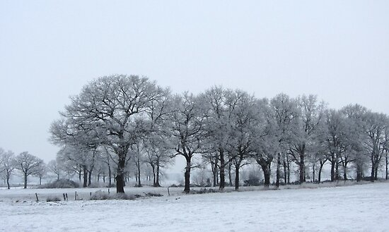 Trees in Winter by ienemien