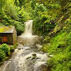 Rydal Hall Waterfall by Stewart Laker