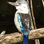 Blue-winged Kookaburra by Marilyn Harris