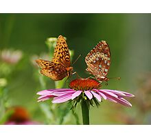 Fritillary Butterfly Duo Photographic Print