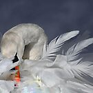 Winter white by Lyn Evans