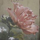 "Notecard ""Writing Home"" by Kathy Nairn"