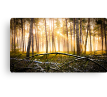 Last Obstacle (Forest Sun) Canvas Print