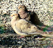 Mourning Doves by tkrosevear