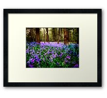 In And Out The Dusty Bluebells Framed Print