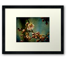 Hint of Spring Framed Print