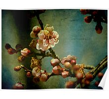 Hint of Spring Poster
