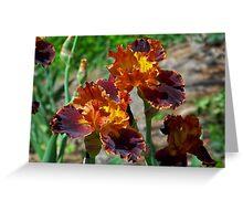 Beautiful Brown Irises Greeting Card