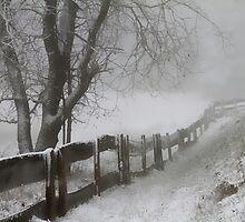 WINTER... WINTER...  WINTER... by Angelika  Vogel