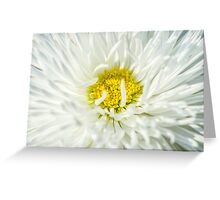 White English Daisy Flower Greeting Card