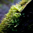 Moss by Edward Hor