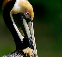 Pelican Profile by Jonicool