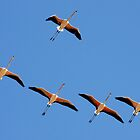 Greater Flamingos in Flight by David Clark