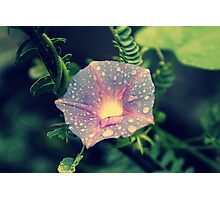 Morning Glory up a Mesquite Tree  Photographic Print