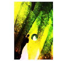 World of Wonder by Hannah Steinum Kvalvik