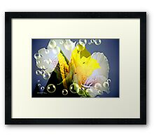 Mix of Beauty Framed Print