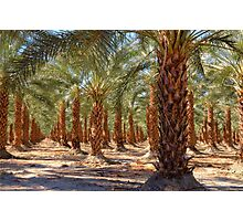 Palm Tree Forest Photographic Print