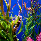 Neon SeaHorse by hcromer