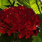 red flower on green - flor roja sobre verde by Bernhard Matejka